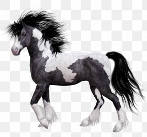 Horse - Horse Colt Domestic Animal PNG