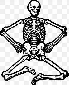 Skeleton Cliparts - Human Skeleton Free Content Clip Art PNG