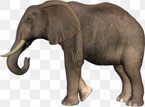 Elephant - African Bush Elephant Asian Elephant Clip Art PNG
