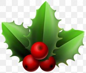 Mistletoe - Mistletoe Phoradendron Tomentosum Christmas Clip Art PNG