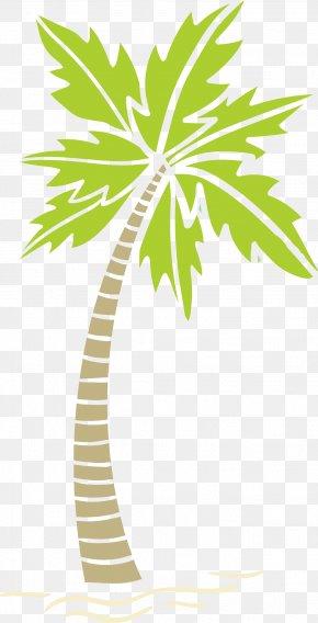 Areca Tree Effect Diagram - Arecaceae Areca Palm Tree PNG