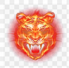 Flame Tiger - Tiger Light Flame Fire PNG