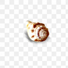Conch - Seashell Sea Snail Conch PNG