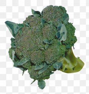 A Broccoli - Broccoli Cauliflower Vegetable Food PNG