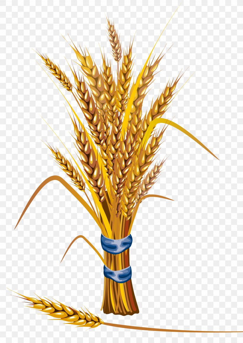 Wheat Icon, PNG, 2480x3508px, Royalty Free, Cereal Germ, Commodity, Drawing, Flowering Plant Download Free