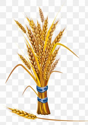 Wheat - Wheat Icon PNG