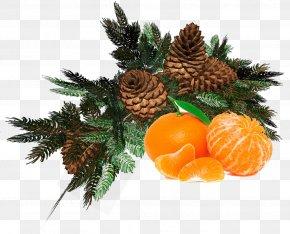 Christmas Tree - Ded Moroz New Year Tree Christmas Designs Christmas Day PNG