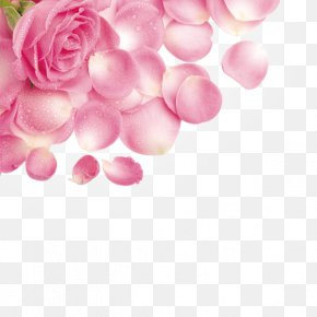 Rose Petals With Water Droplets - Rose Petal Flower Pink PNG