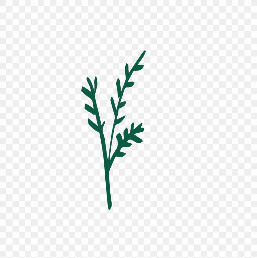 Twig Logo Plant Stem Leaf Font, PNG, 1709x1716px, Twig, Branch, Grass, Leaf, Logo Download Free