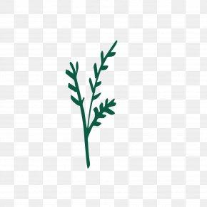 Leaf - Twig Logo Plant Stem Leaf Font PNG