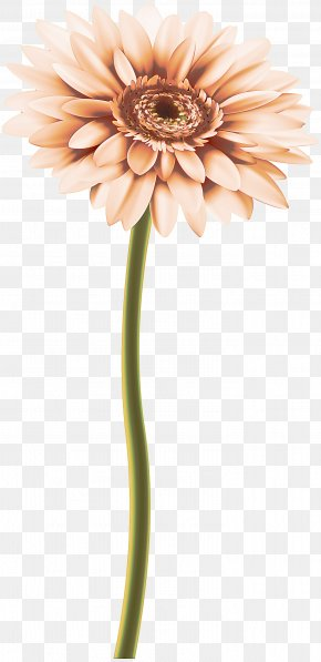 Artificial Flower Daisy Family - Artificial Flower PNG