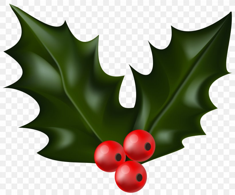 Christmas Clip Art, PNG, 6000x4982px, Common Holly, Aquifoliaceae, Aquifoliales, Christmas, Christmas Carol Download Free