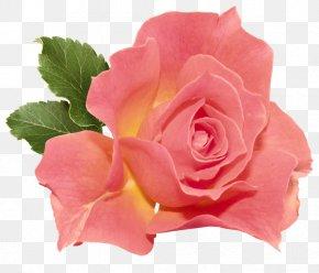 Orange Rose Clipart - Rose Flower Orange Clip Art PNG