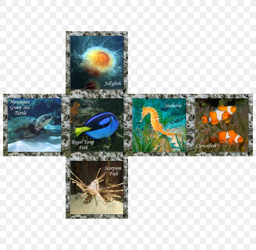 Flora Fauna Organism Marine Biology 0, PNG, 800x800px, Flora, Biology, Clownfish, Collage, Cube Download Free