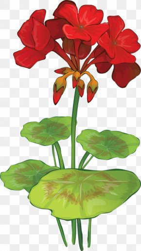 Nasturtium Flower Cliparts - Geranium Maculatum Flower Drawing Geraniums Clip Art PNG