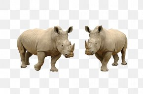 Rhino Picture Material - Rhinoceros Stock Photography Download PNG
