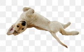 Puppy - Puppy Golden Retriever Small Greek Domestic Dog French Bulldog Pug PNG