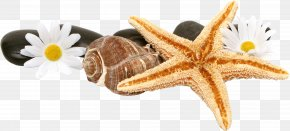 Starfish - Computer Monitor Light-emitting Diode Liquid-crystal Display Backlight 1080p PNG