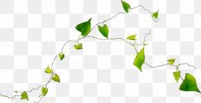 Twig Plant Stem Desktop Wallpaper Flower Leaf PNG