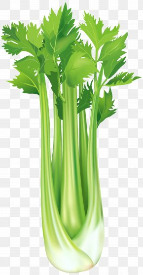 Celery Free Clip Art Image - Celeriac Vegetable Clip Art PNG
