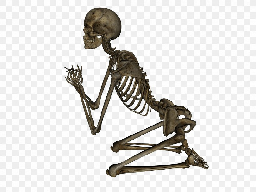 Human Skeleton, PNG, 2400x1800px, Human Skeleton, Anatomy, Appendicular Skeleton, Axial Skeleton, Bone Download Free