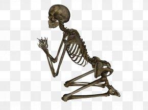 Skeleton Image - Human Skeleton PNG