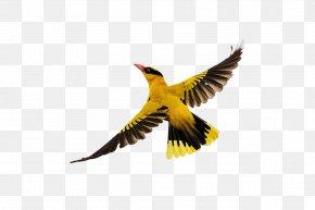 Birds Flying - Bird Flight PNG
