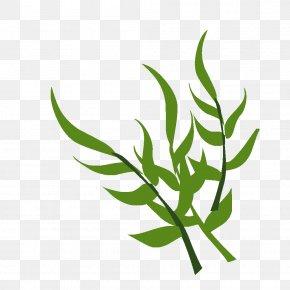 Leaf - Leaf Grasses Plant Stem Tree Clip Art PNG