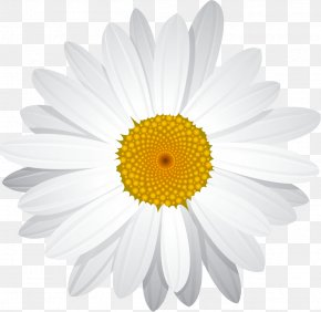 Yellow Daisy - Common Daisy Clip Art PNG