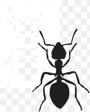 Free Hummingbird Clipart - Ant Free Content Website Clip Art PNG