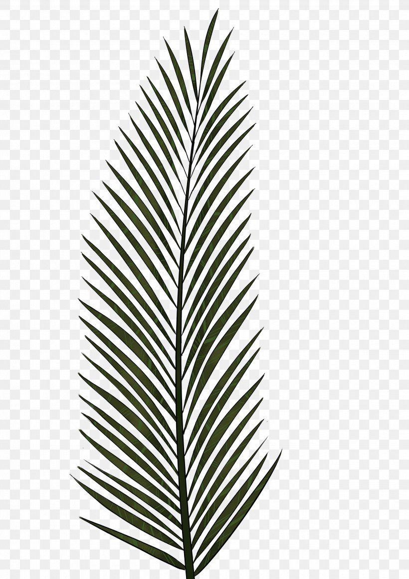 Arecaceae Leaf Palm Branch Tree, PNG, 2480x3507px, Arecaceae, Areca Palm, Arecales, Black And White, Drawing Download Free