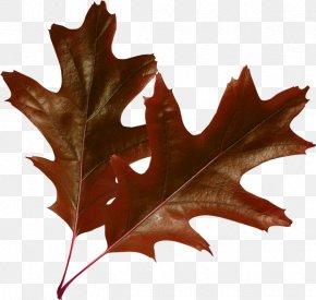 Leaf - Raster Graphics Leaf Autumn Leaves Clip Art PNG