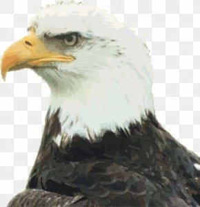 Eagle - California Uncle Sam Citizenship United States Nationality Law Zazzle PNG