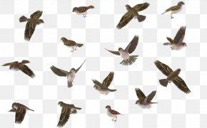 Flying Bird - Bird House Sparrow Wren PNG