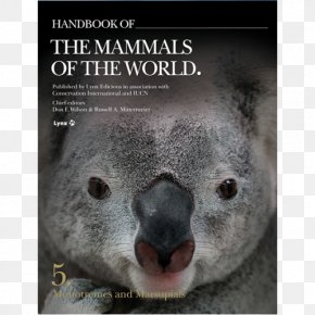 Volume 2 Handbook Of The Birds Of The World MonotremeKoala - Koala Handbook Of The Mammals Of The World PNG
