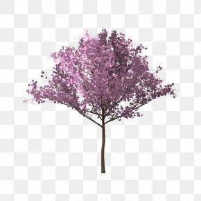 Bunga Sakura - Tree Branch Cherry Blossom PNG