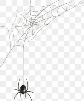 Hand-painted Spider Web - Spider Web Black House Spider Illustration PNG