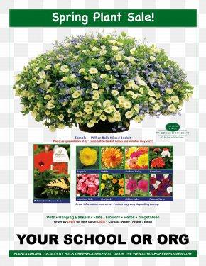 Spring Plant - Hanging Basket Flower Plant Calibrachoa Garden PNG
