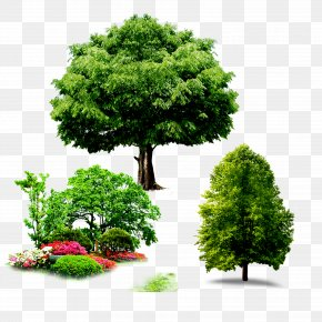 Trees - Yongdu-ro 156beon-gil Computer File PNG