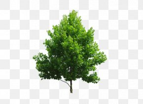Plant - Tree Plant Branch PNG