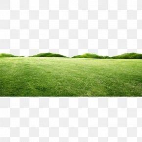 Fresh Spring Green Grass Hill PNG