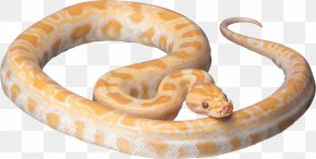 White Snake Image Picture Download - Snake Clip Art PNG