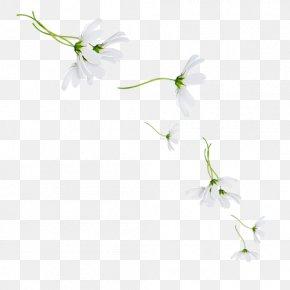 Leaf - Petal Floral Design Twig Desktop Wallpaper Plant Stem PNG