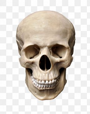 Skull - Skull Stock Photography Human Skeleton PNG