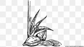 Almond - Black And White Almond Drawing Coloring Book Clip Art PNG