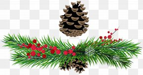 Pine Branches And Pine Cones Picture - Pine Clip Art PNG