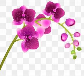 Orchid Flower Transparent Clip Art Image - Orchids Flower Clip Art PNG