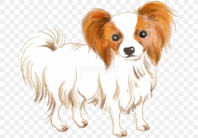 Papillon Dog Phalène Dog Breed Companion Dog Spaniel, PNG, 660x574px, Papillon Dog, Breed, Carnivoran, Companion Dog, Dog Download Free
