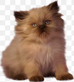 Kitten - Kitten Ragdoll Persian Cat Clip Art PNG