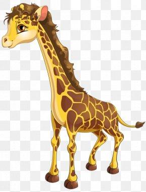 Cute Giraffe - Northern Giraffe Stock Photography Drawing Illustration PNG
